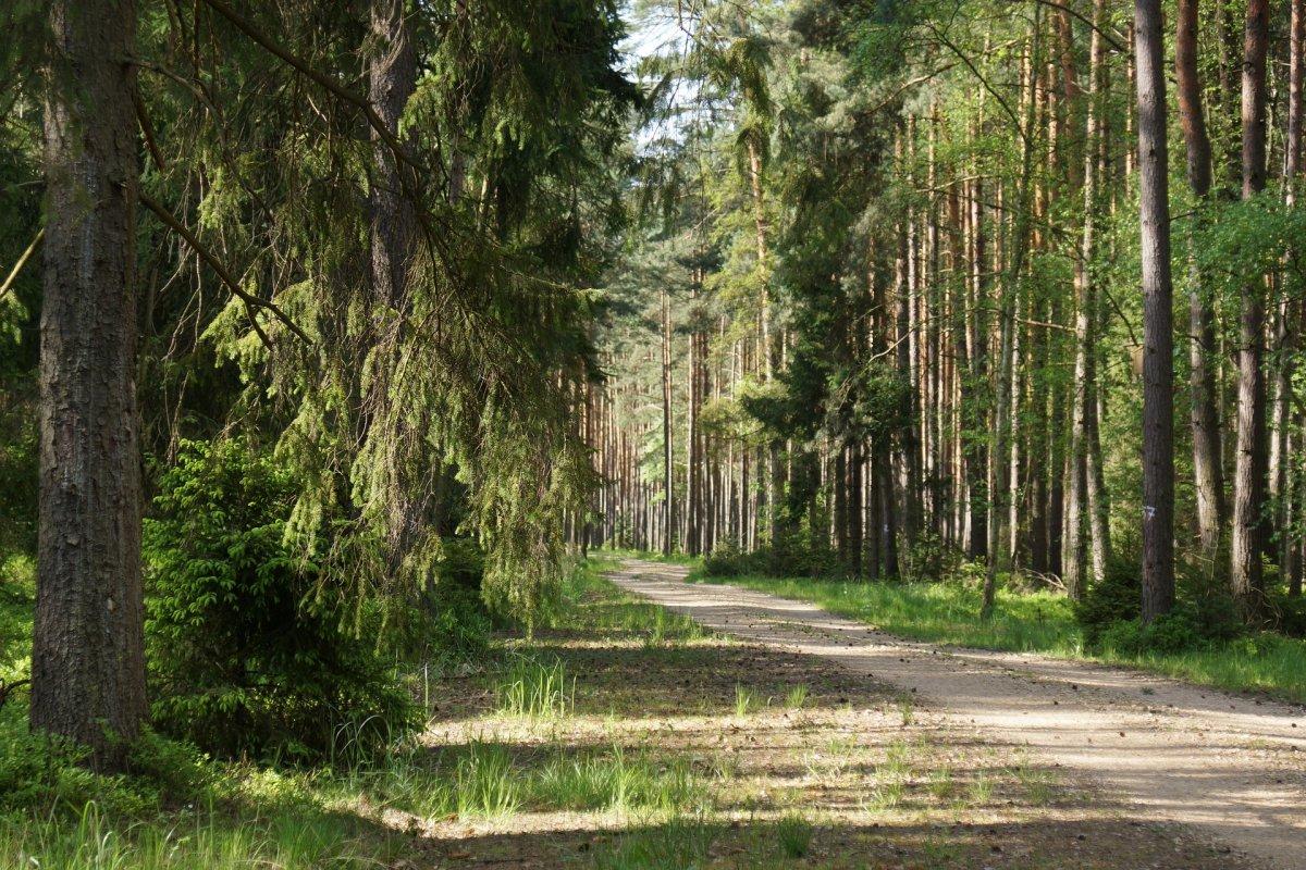 Bezpieczny spacer w lesie