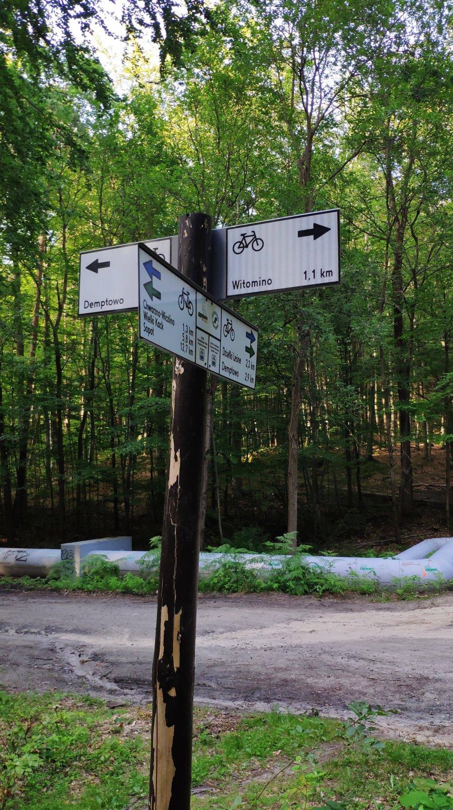 W gdyńskich lasach trwa uzupełnianie oznakowania dróg rowerowych // fot. Wojciech Racek