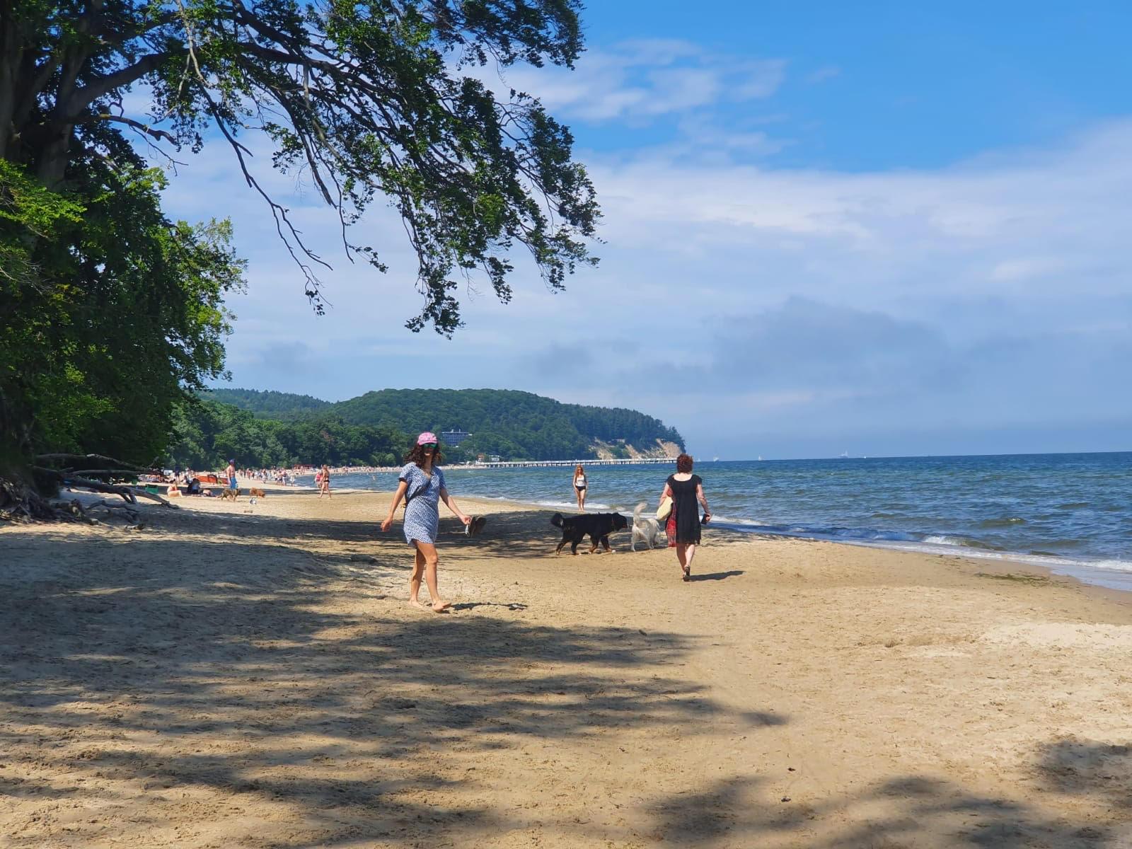 Psia plaża w Gdyni Orłowie, fot. Małgorzata Omachel-Kwidzińska