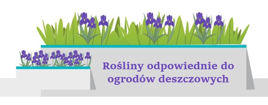 Ogród deszczowy - rośliny
