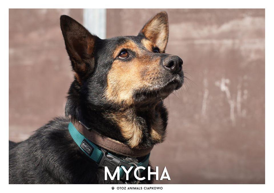 Mycha szuka domu, fot. OTOZ Animals Ciapkowo