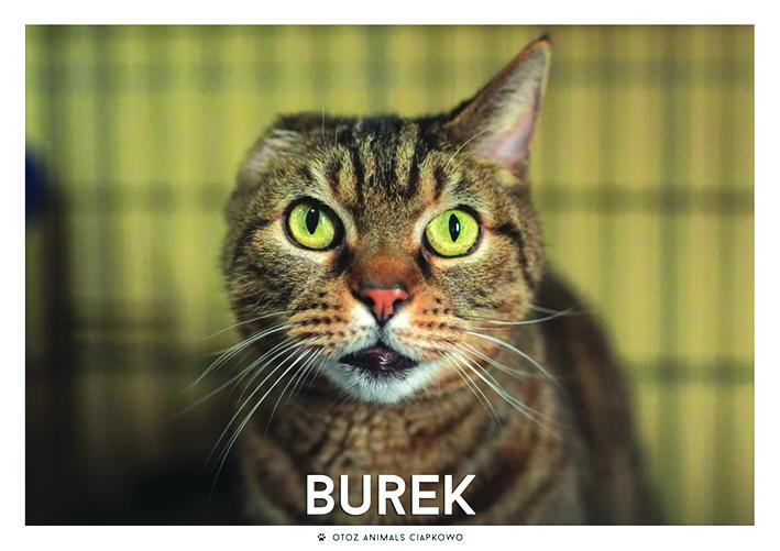 Kotek Burek
