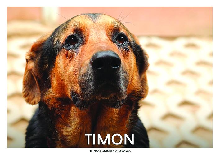 Pies Timon