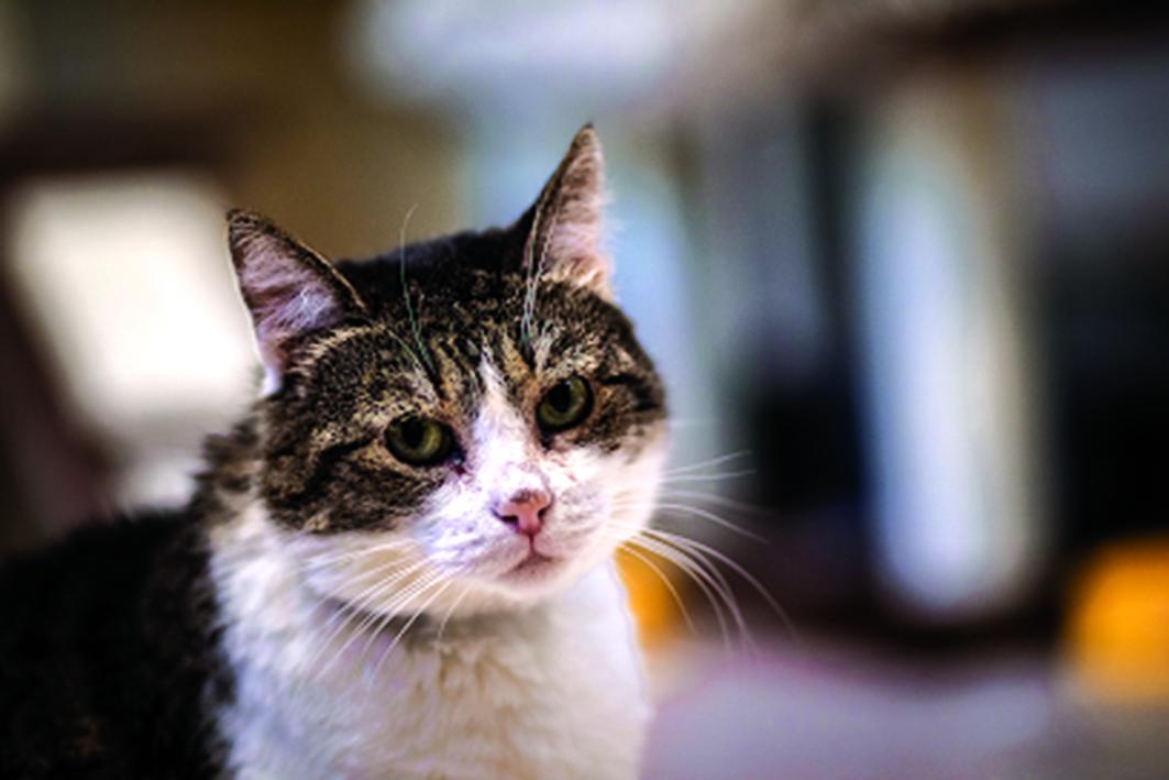 """Sałatka - kotka do adopcji // mat. OTOZ Animals """"Ciapkowo"""""""