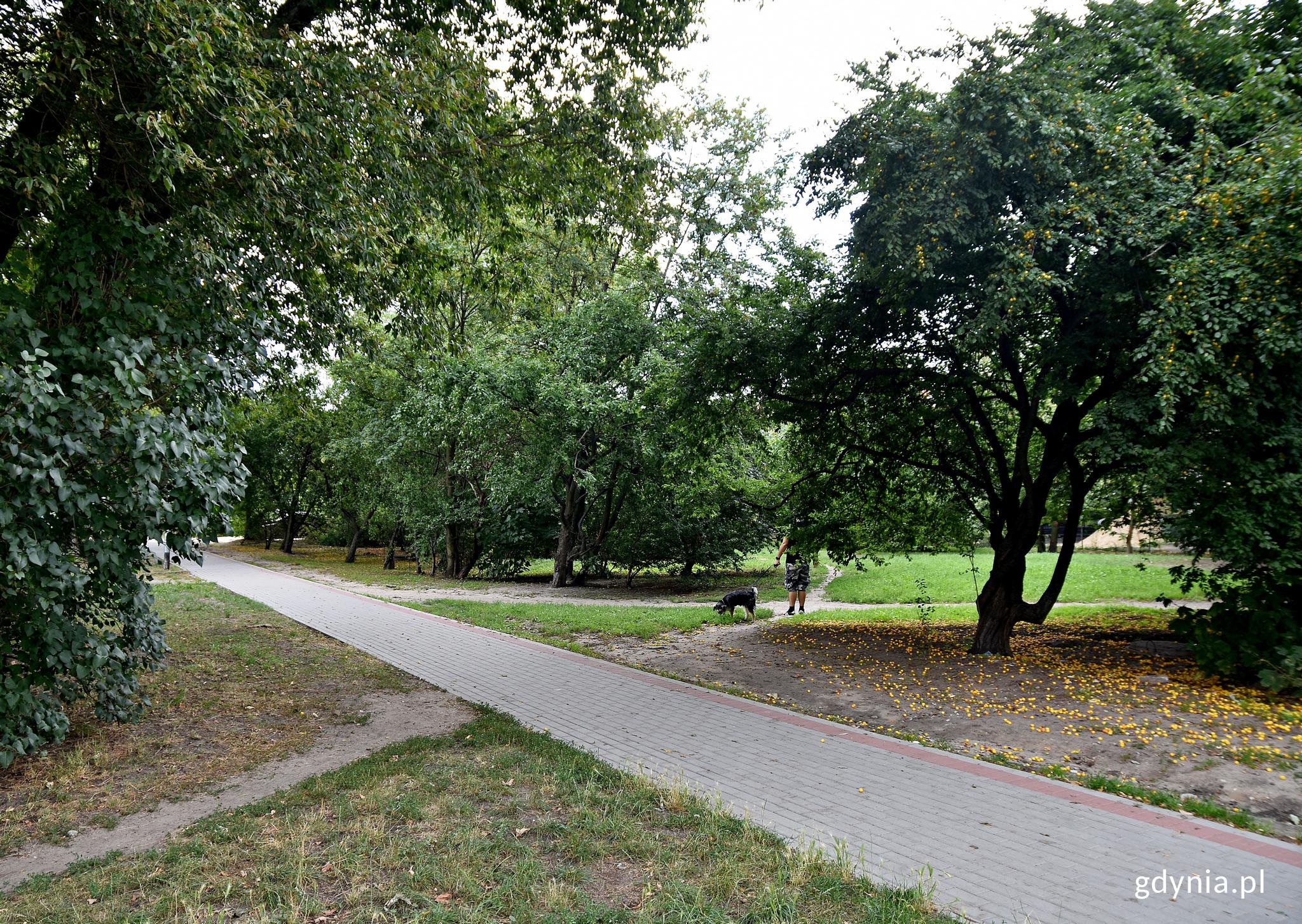 Tak obecnie wygląda teren, gdzie powstanie park// fot.gdynia.pl