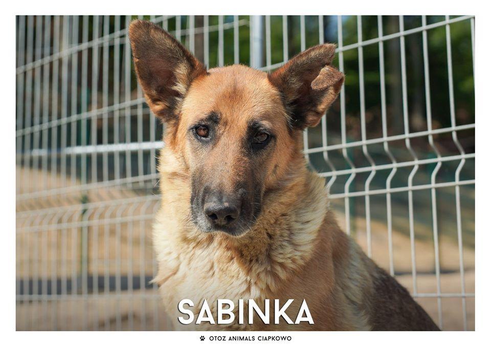 Sabinka szuka domu, fot. OTOZ Animals Ciapkowo