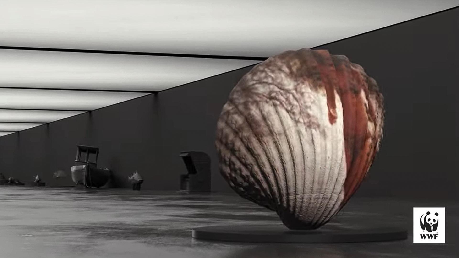 Bałtyk w wirtualnym muzeum, źródło: zrzut ekranu z video WWF Polska