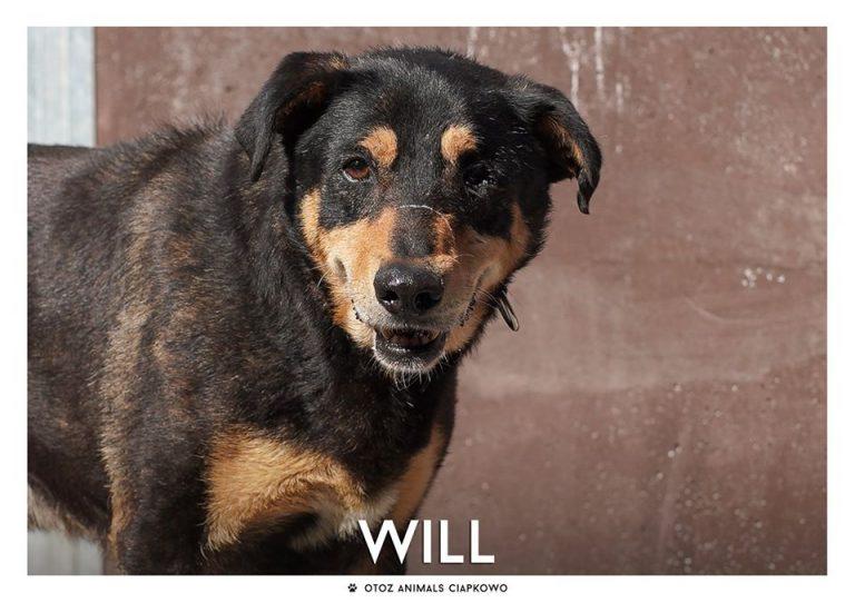 Will czeka na nowy dom, fot. OTOZ Animals Ciapkowo