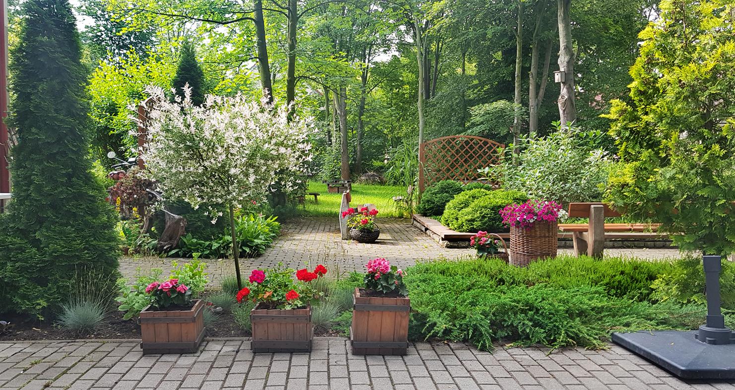 Ogród. // zdjęcie archiwalne
