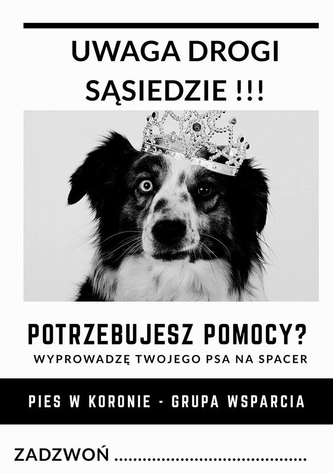 mat.prasowy Pies w Koronie