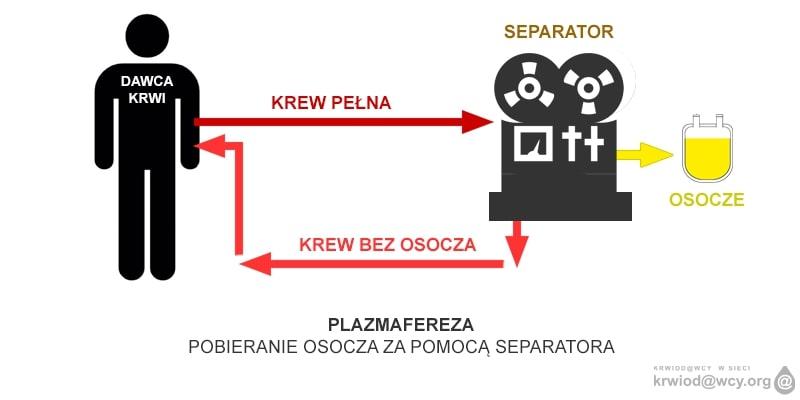 Grafika: pobieranie osocza za pomocą separatora. Mat. prasowe.