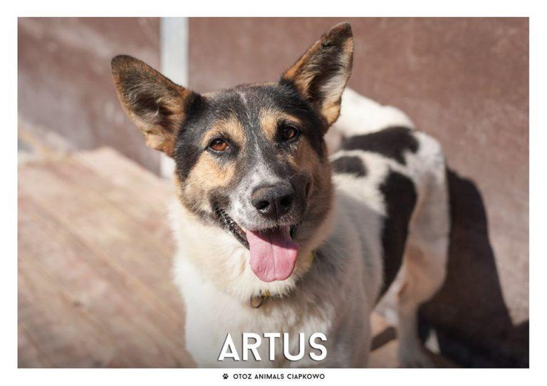 Artus czeka na nowy dom, fot. OTOZ Animals Ciapkowo