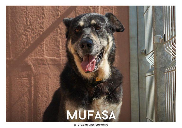 Mufasa czeka na nowy dom, fot. OTOZ Animals Ciapkowo