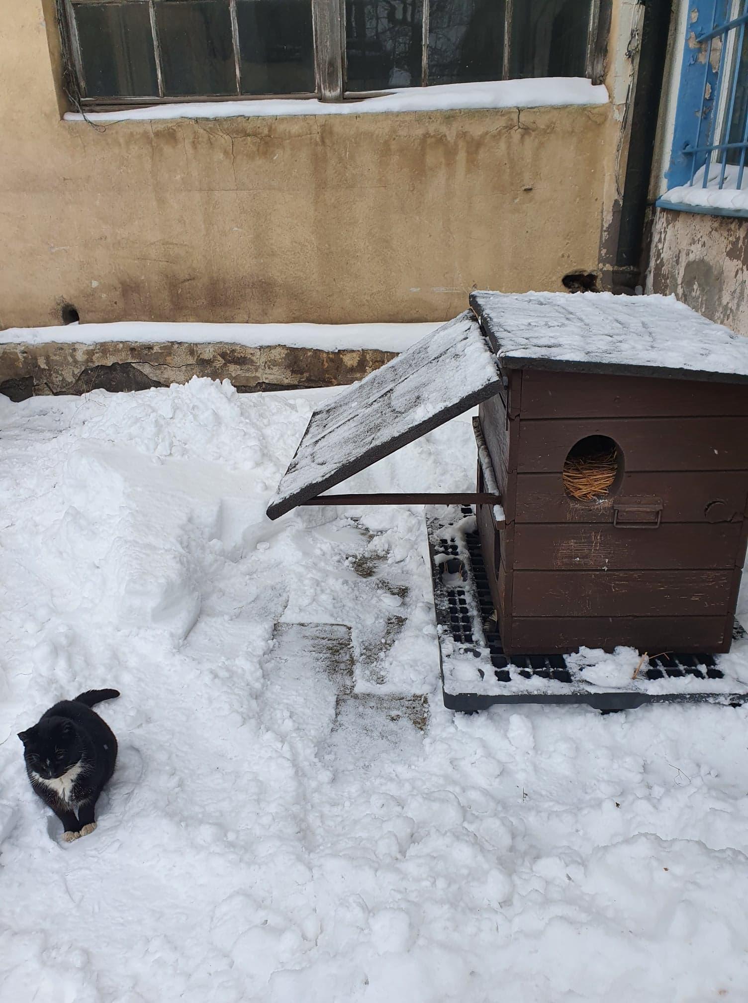 wolno bytujący kot w jednym z domków na terenie Gdyni // fot. materiały Pomorskiego Kociego Domu Tymczasowego
