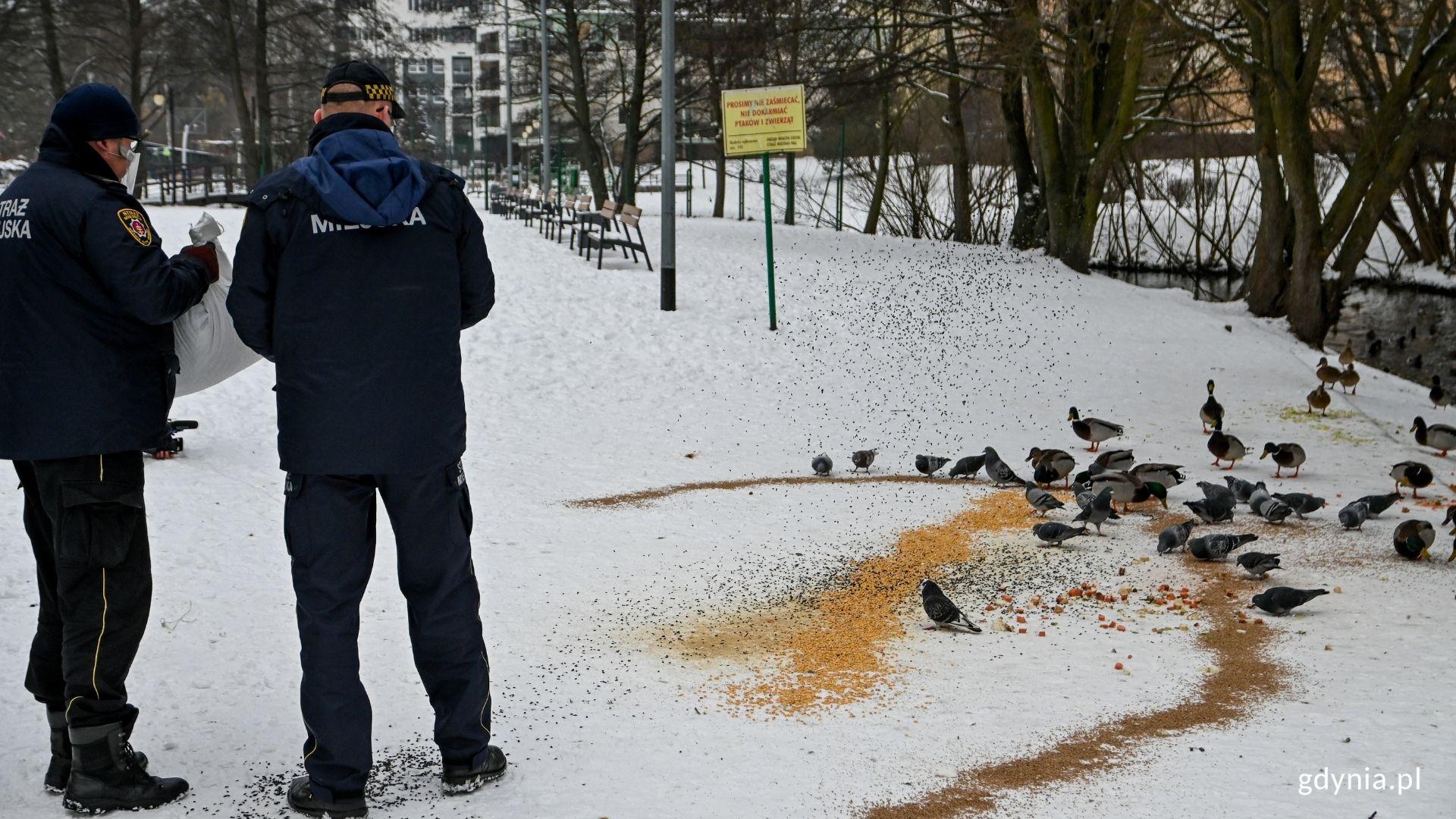 EkoPatrol dokarmia ptaki w Parku Kilońskim, fot. Magda Śliżewska