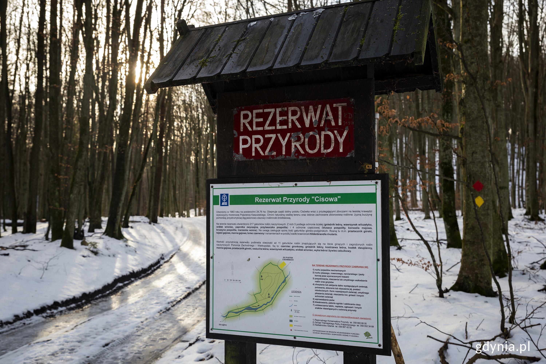 Rezerwat przyrody Cisowa, fot. Przemysław Kozłowski