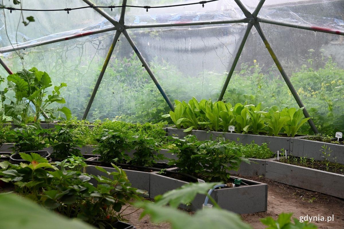 HydroBaza w tuBazie. Zdjęcie zrobione wewnątrz kopuły, w której znajdują się doniczki z ziołami i warzywami.// fot. Weronika Rozbicka