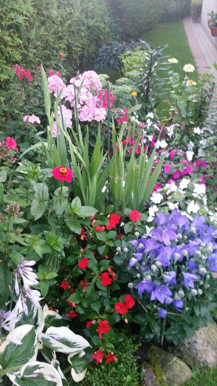 Aranżacja autorstwa Janiny Dadacz, w której przeważają rośliny znoszące cień: funkie, dzwonki i floksy