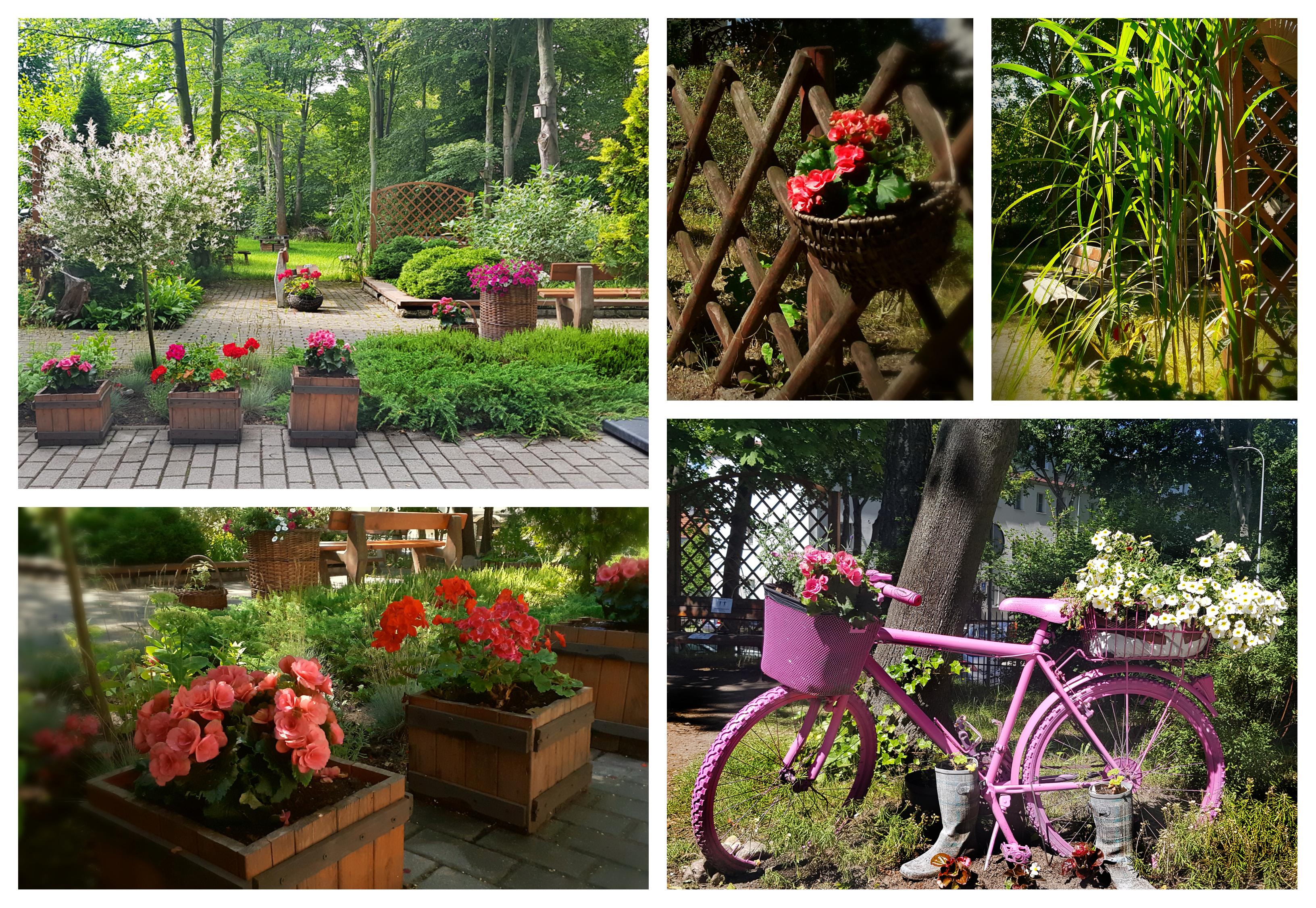 Aranżacja ogrodu przy Środowiskowym Domu Samopomocy Maczka 1, w której przeważają doniczki z begoniami i pelargoniami oraz różowy rower pełniący rolę kwietnika