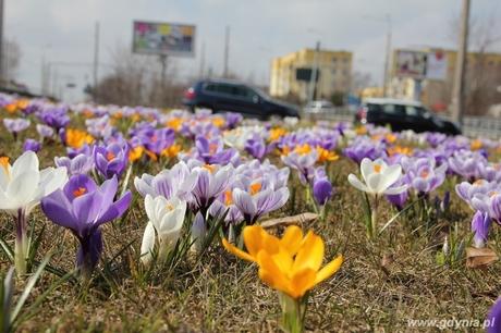 W konkursie Gdynia kwitnie wyróżniono zdjęcie Anny Łopion