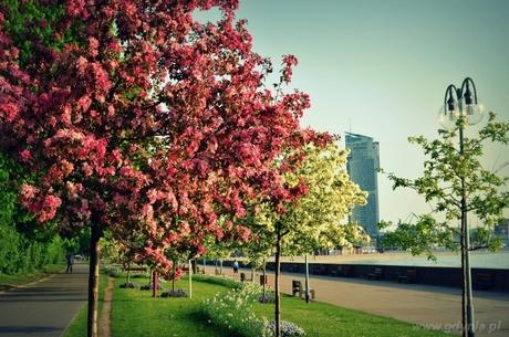 W konkursie Gdynia kwitnie wyróżniono zdjęcie Katarzyny Mazur