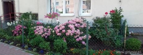 Wyróżnienie na stronie internetowej w konkursie Gdynia w Kwiatach dla Joanny Kurowskiej z Chyloni
