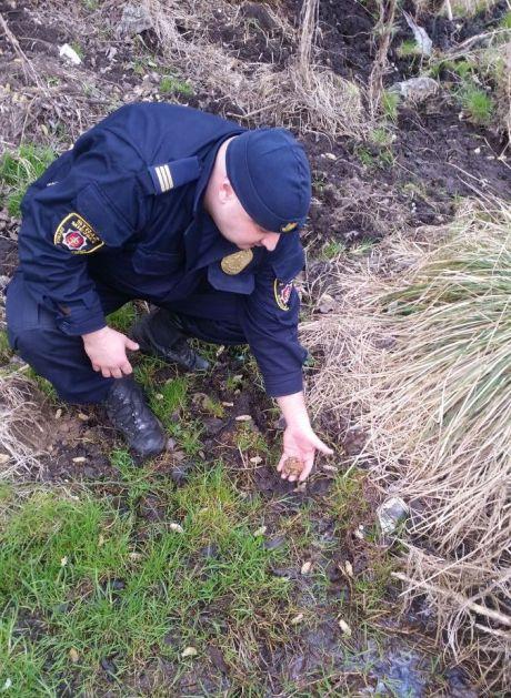 Strażnik Ekopatrolu przenosi płaza w bezpiecznie miejsce, fot. Straż Miejska